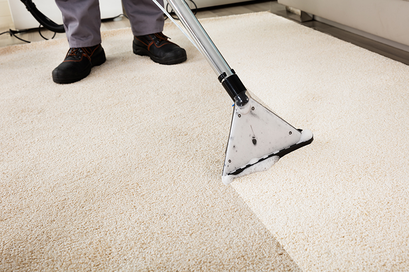 Professional Carpet Cleaning Service in Action