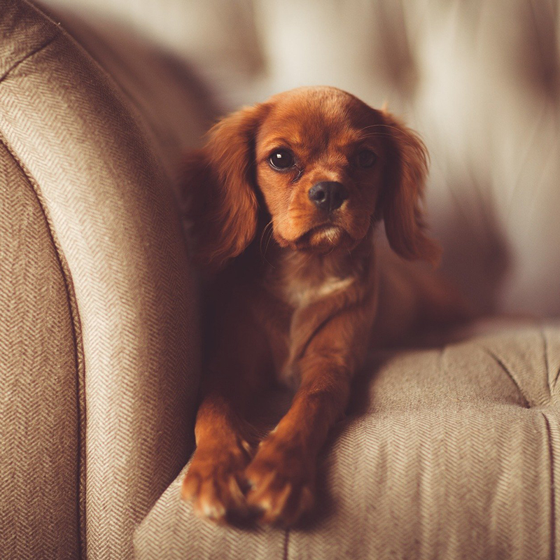 Sofas and Couches Upholstery Cleaning