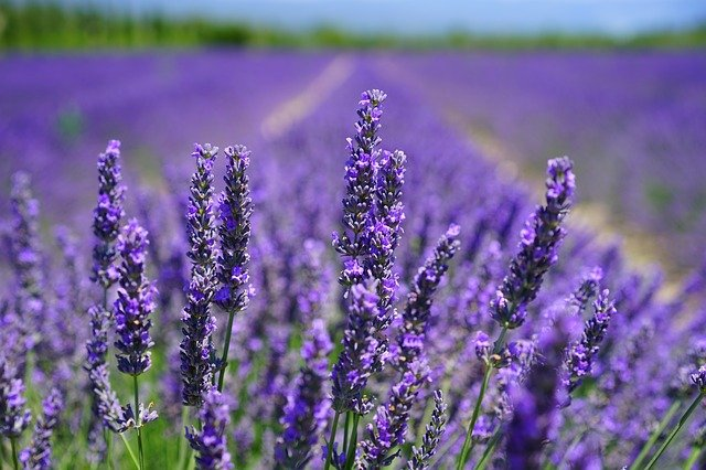 Smoke Smell in Fire Try Lavender